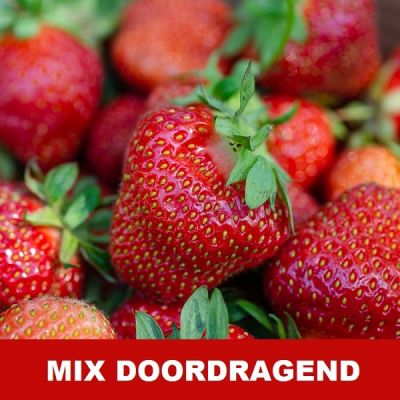 15x Aardbei mix DOORDRAGEND